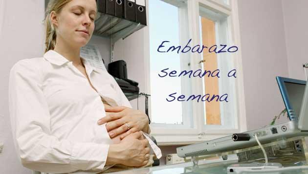 foto embarazo semana a semana