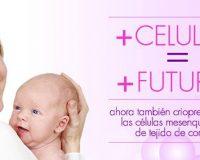 bioprocrearte celulas madre